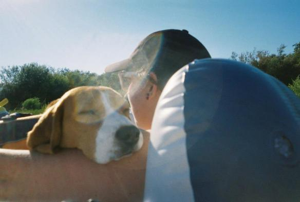 beagles like to cuddle on the river.