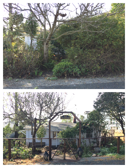Front Yard Before and after year 1
